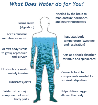 water properties: the water in you (water science school), Muscles