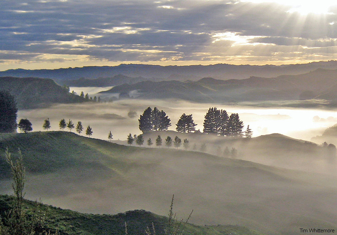 Early morning fog layer filling a valley in New Zealand.