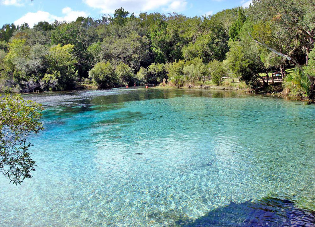 Silver Glen Springs, in the Ocala National Forest, Florida (Credit: Galina and Georgi Stanev).