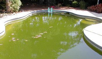 How Does Our Swimming Pool Stay So Clean Water Science Questions And Answers From The Usgs