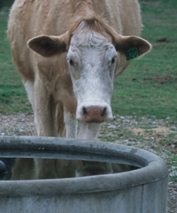 USGS: Livestock Water Use in the United States